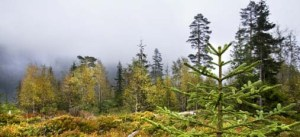 Løvenskiold skogsdrift mm.