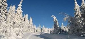 Vintervei_ 507x233